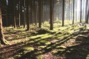 AXA IM RA Forestry