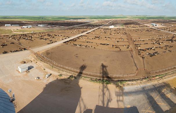 Green Plains Cattle