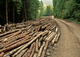 Demand for wood is increasing, especially from China